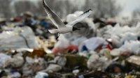 """ОНФ направил президенту доклад о ходе """"мусорной реформы"""""""