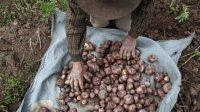 Деревенские жители обогнали горожан внаборе веса