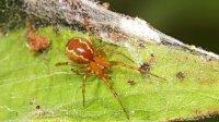 Нарастающую злость пауков связали склиматом