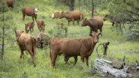 Пять быков найдены загадочно обескровленными на ранчо вСША
