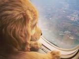 Кот спрятался вчемодане иудивил сотрудников аэропорта