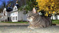 ВЕАО кошка спасла семью припожаре вжилом деревянном доме