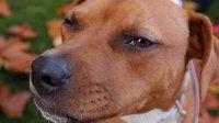 Ученые рассказали, как узнать биологический возраст собаки