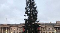 Главную елку Лондона осмеяли всоцсетях заунылый вид