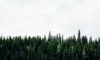 ВОрегоне бросились искать снежного человека