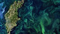 Спутник снял, как цветет Балтийское море