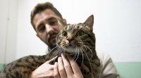 Кот Виктор похудеет наполтора килограмма иполетит вКазань