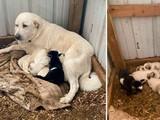 ВСША пес принес хозяевам медвежонка (фото)