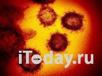 Так выглядит коронавирус под электронным микроскопом