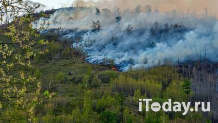 Глава Рослесхоза назвал основные причины лесных пожаров - 21.09.2020