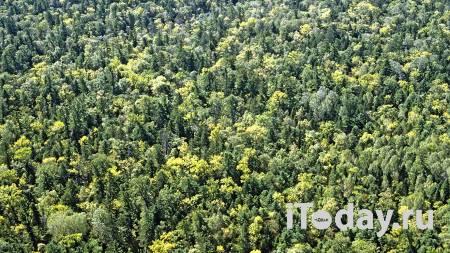 В Приморье спасли пенсионерку, которая два дня провела в лесу - 25.09.2020