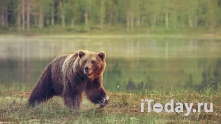 В подмосковном цирке медведь напал на дрессировщика и ребенка - 01.10.2020