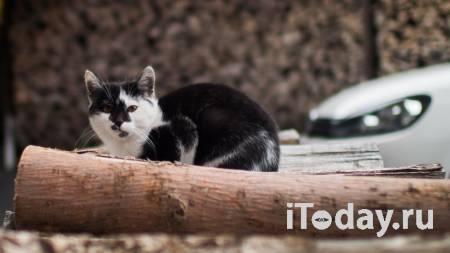 В Москве сняли с дерева обессилившую кошку - Радио Sputnik, 02.10.2020