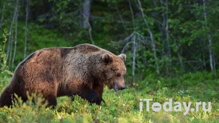 Медведь напал на человека в московском цирке - Радио Sputnik, 05.10.2020