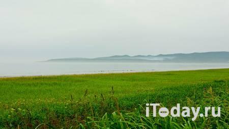 Прокуратура проверит сообщения о массовой гибели рыбы на Сахалине - 23.10.2020