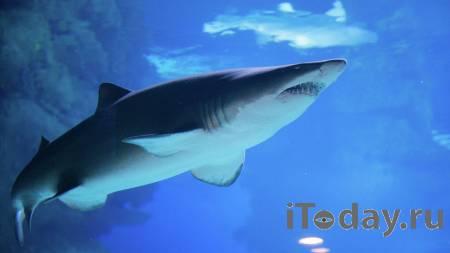 Остался без руки. В Египте акула едва не растерзала украинского туриста - Радио Sputnik, 27.10.2020