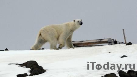 В приюте по Курском медведь пытался затащить в клетку сотрудницу - 28.10.2020