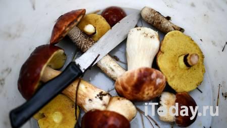Картошка с грибами. Мальчик погиб от отравления любимым блюдом - Радио Sputnik, 28.10.2020