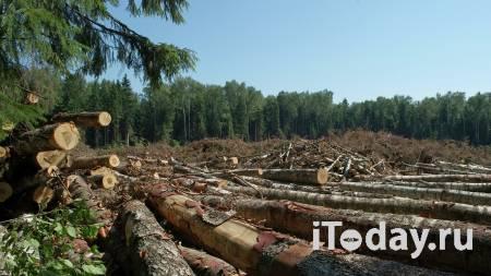 """В Иркутской области """"черные лесорубы"""" вырубили деревья на 14 млн рублей - Радио Sputnik, 29.11.2020"""
