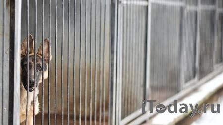 СМИ показали видео с места, где собаки насмерть загрызли ребенка - Радио Sputnik, 03.01.2021