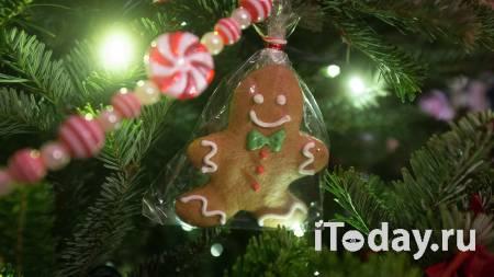 В Ярославской области мужчина влез на новогоднюю ель и сорвался с нее - 05.01.2021
