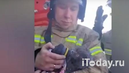 Сбежавший в аэропорту под Ярославлем кот нашелся спустя пять месяцев - 18.01.2021