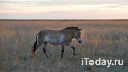 Опасные Коты. Под Иркутском поймали лошадиную воровку - Радио Sputnik, 18.01.2021