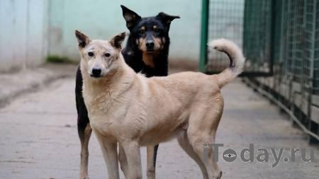 В Улан-Удэ собаки напали на девятилетнюю девочку - 26.01.2021