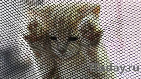 В Москве задержали стрелявшего по кошкам мужчину - 26.01.2021