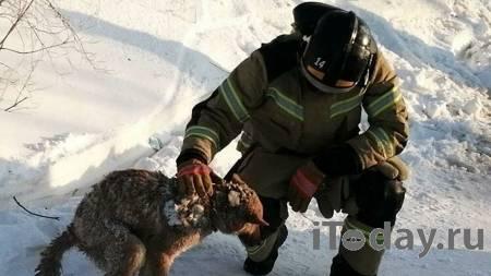 На Ямале спасли собаку спустя два дня после пожара в жилом доме - 24.02.2021