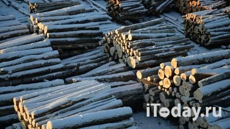 Распилил на доски. Самарчанин вырубил деревья на 240 тысяч рублей - Радио Sputnik, 26.02.2021