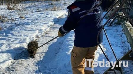 В Ленинградской области из очистных сооружений спасли енотовидную собаку - 05.03.2021