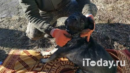 В Хабаровском крае пожарные спасли пса, отравившегося угарным газом - 06.04.2021