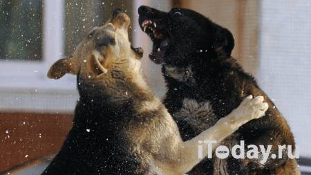 Мать растерзанного собаками ребенка рассказала о трагедии - 18.04.2021