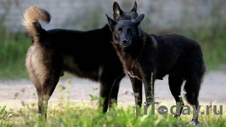 В Башкирии после гибели ребенка взяли на контроль проблему бродячих собак - 18.04.2021