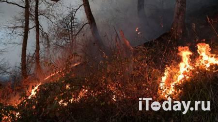 Вильфанд назвал регионы с высоким риском природных пожаров - 19.04.2021
