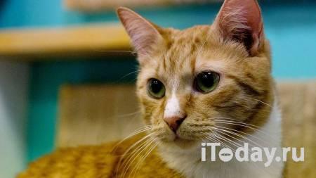В челябинской квартире более 20 кошек погибли от голода - 19.04.2021