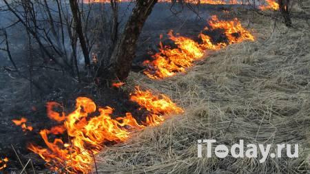 Жители частных домов Подмосковья обеспокоены проблемой поджога травы - 19.04.2021