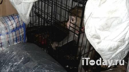 В автобусе Москва-Махачкала полиция обнаружила обезьяну в клетке - 02.05.2021