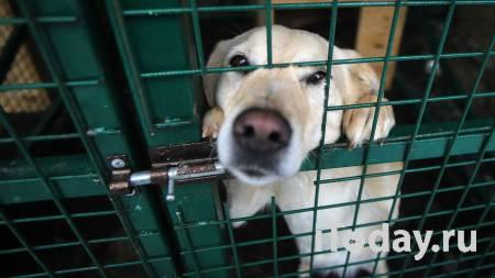 Волгоградского члена партии ЕР заподозрили в издевательствах над собакой - 02.05.2021