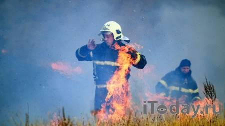 В Омской области полдеревни сгорело из-за лесного пожара - 06.05.2021