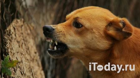 Жительница Пермского края спасла детей от рассвирепевшей собаки