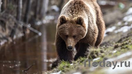 В Иркутской области полиция застрелила медведя на кладбище - Радио Sputnik, 03.06.2021