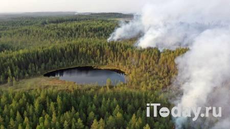 Площадь лесных пожаров в Карелии превысила девять тысяч гектаров - 22.07.2021