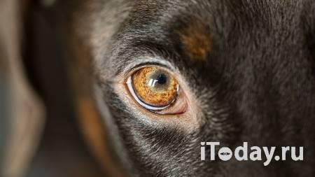 В Тульской области проверят сообщения об убийстве бездомного пса - 22.07.2021