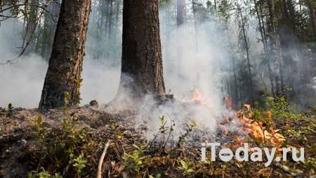 Площадь лесных пожаров в Карелии превысила девять тысяч гектаров