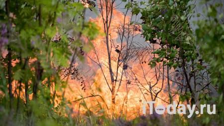 Лесной пожар угрожает перейти на здания на острове Путсаари на Валааме - 27.07.2021