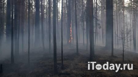 В Якутии за сутки ликвидировали семь природных пожаров - 31.07.2021