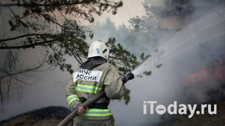 В Оренбурге ликвидировали крупные очаги природного пожара - 03.08.2021