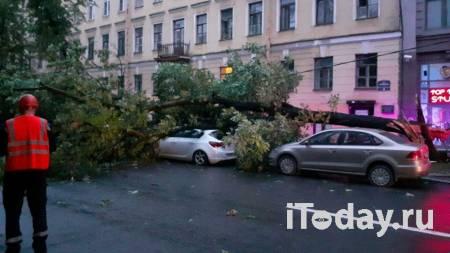 В Санкт-Петербурге сильный ветер за ночь повалил около ста деревьев - 03.08.2021